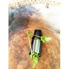 Melaleuca - čajovník esenciálny olej